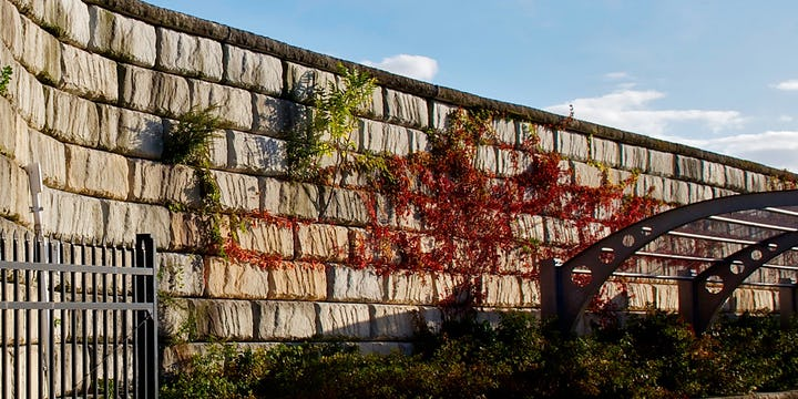 A Limestone texture retaining wall stands tall as ivy grows up it's height